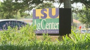 LSU Medical Marijuana